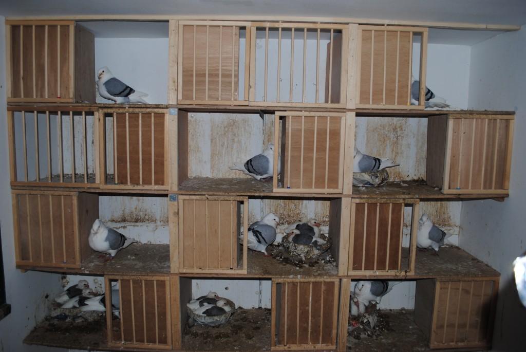 De broedafdeling, ruimte voor 12 koppels