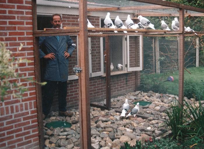 Wierd in duivenhok 1994